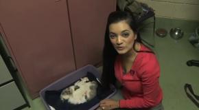 Кошка спасла щенка