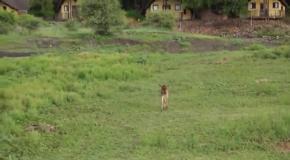 5 Животных , которые спасли друг друга