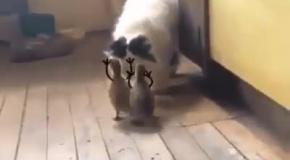 Лови его