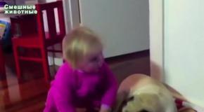 Малыши и прикольные мопсы
