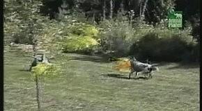 Собакосушилка