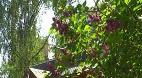 Запахи весны