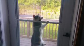 Кот застрял во входной двери