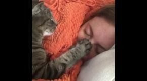 Кот укладывает хозяйку спать