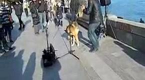 Бездомный пес взорвал Интернет своим пением