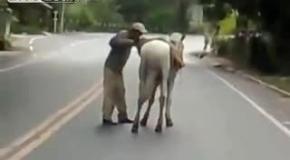 Взбирается на лошадь