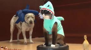 Кот-акула на пылесосе преследует утенка
