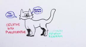 Наука о котах