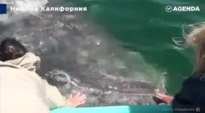 Погладь кита!