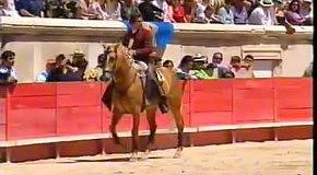 Верный конь Тореадора