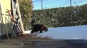 Мару в дождевике на снегу