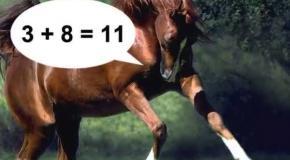 Кони, которые умеют считать