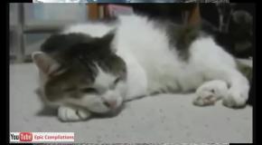 Приколы :Страшнее кошки зверя нет.