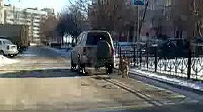 Как выгуливать собаку в мороз