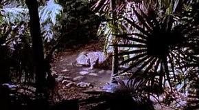 Ягуар против крокодила