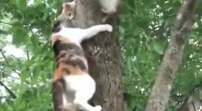 Кошка снимает котенка с дерева.