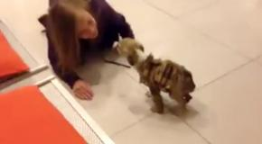 Женщина спасла щенка