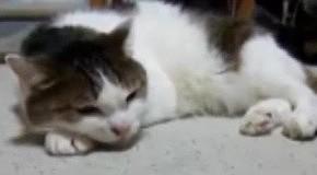 ТОП-10 лучших видео о животных за неделю