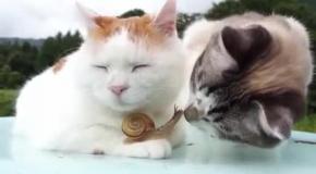 Кот  поймавший дзен и бесстрашная улитка