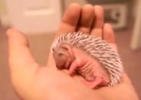 Смотреть смешные ролики и видео про животных