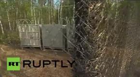 Путин выпустил на волю тигров