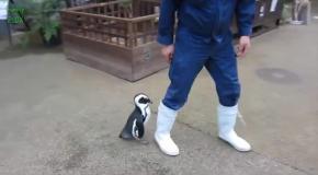 Топ10 прикольный видео с пингвинами