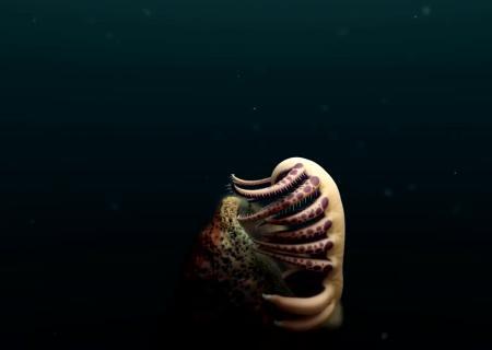 Ученые нашли останки невероятного создания возрастом 500 миллионов лет