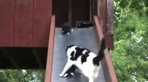 Котята на детской горке
