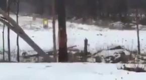 Вооруженные люди завалили дерево