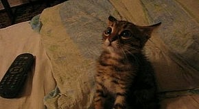 Гипноз Кота !