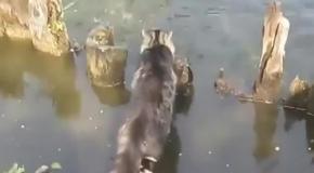 Кот рыбачит на хлеб