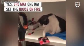 Котик-беспредельщик
