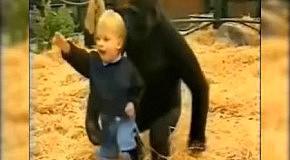 Горилла играет с маленькой девочкой