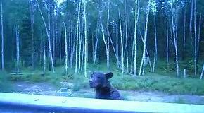Мишка вышел из леса за угощеньями