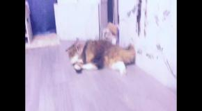 Наш кот Филя