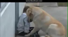 Малыш и его собака