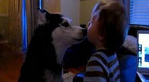 Хаски Мишку целует малыш