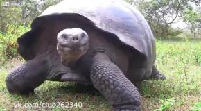 Черепаха исследует камеру