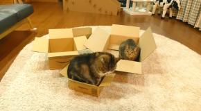 Мару и новые коробки
