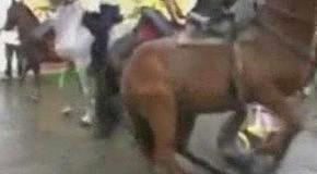 Конь пристал к кобыле