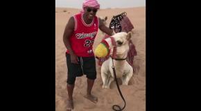 Звезда Марселя встретил верблюда в наморднике