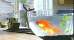 Гавкающая рыба