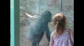 Детеныш гориллы подружился с девочкой