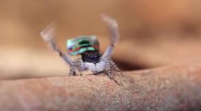 Танцующий паук (№4)