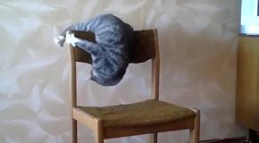 Кот акробат  Акробатика со стулом