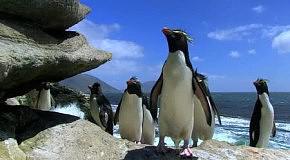 пингвиньи фейлы