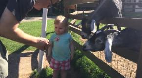 Вот коза