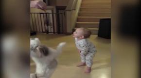 Собак у чит малыша танцам
