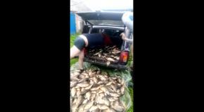 Рыбалка не по детски. Вот такой улов.