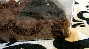 Acanthoscurria geniculata L7